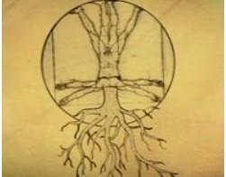 En la Mente de las Plantas: La Neurobiología Vegetal.