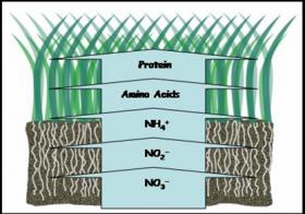 Fertilidad y Fertilización: caso del Nitrógeno