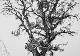 Árboles Singulares. Protege tus raíces