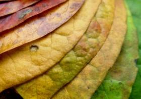 El porqué de los colores del otoño