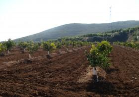 La salinidad del suelo en agricultura